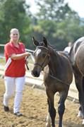 Hest til salg - SKALLEBÆKS RENAULT