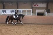 Hest til salg - ROMANIK AF RUSKÆR