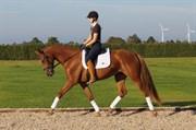 Hest til salg - DALMOSEGAARDS LAMIA