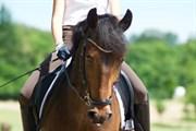 Hest til salg - VESTENAAS TAZET NOVA