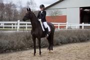 Hest til salg - BLADE'S DANUBIA