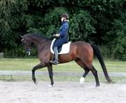 Hest til salg - ATTERUPGAARDS DRACHMANN