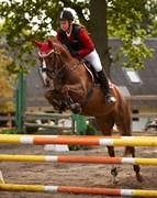 Hest til salg - DAMGÅRDENS ANNA BELL