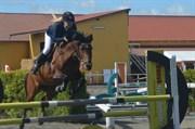 Hest til salg - Cassidy