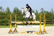 Hest til salg - ULRICO