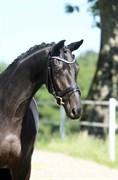Hest til salg - GØRKLINTGÅRDS SAIGON