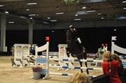 Hest til salg - MISTY