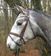 Hest til salg - RAYPAWERS STAKKALOU