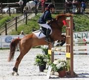 Hest til salg - LEJARO ROUGE