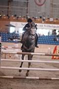 Hest til salg - ZENIA NØRGAARD