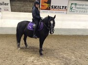 Hest til salg - BIRKEGÅRDENS IRIS