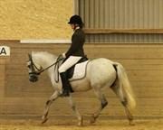 Hest til salg - NØRLUNDS WATSON