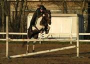 Hest til salg - LITTLE FOOT