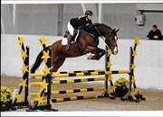 Hest til salg - HEART BEAT'S UNICORN