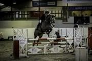 Hest til salg - CHAMP
