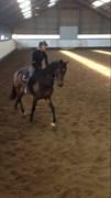 Hest til salg - RENEUR