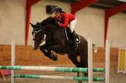 Hest til salg - CRELINE