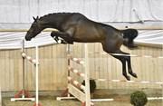 Hest til salg - 7 - DIABLO