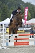 Hest til salg - CHULA VISTA