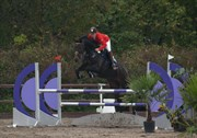 Hest til salg - CASINO