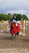 Hest til salg - Shania