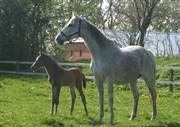 Hest til salg - TOSCANA X