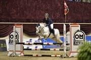 Hest til salg - HESTEKLEWA WALIS