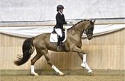 Hest til salg - 482 - RED DONNA