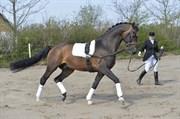 Hest til salg - LEO-LIGHT