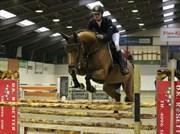 Hest til salg - TAARUPGAARDS RUBIN
