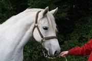 Hest til salg - MARKBOOK'S FIONA