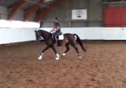 Hest til salg - CREATURE THORUPLUND