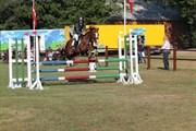 Hest til salg - AAGAARD'S BEAUTY