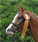Hest til salg - LYKKEHØJS DOMINIQUE