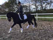 Hest til salg - ÅGÅRD'S DIABLO