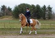 Hest til salg - ELVIRA WALES