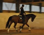 Hest til salg - Trebbiano K