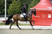 Hest til salg - GABY ASK