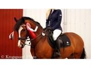 Hest til salg - Knockcullen Lass