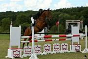 Hest til salg - CHARMEUR
