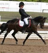 Hest til salg - Golden Joly