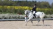 Hest til salg - EDENS JASPIS