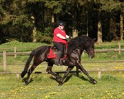 Hest til salg - MOHICANO