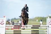 Hest til salg - HUMMELS GREEN DAY