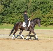 Hest til salg - HESTLUND´S GAMIN