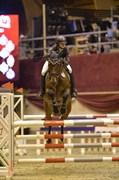 Hest til salg - TIRS TAXFREE
