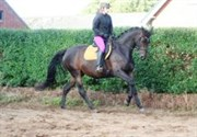 Hest til salg - ADELA