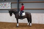 Hest til salg - FREDRIKSMINDES STUNTJUNGE