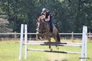 Hest til salg - PANTERS PLUNCH