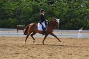 Hest til salg - FAITH SUNSHINE
